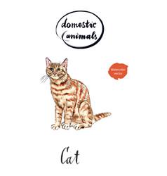 ginger tabby cat vector image