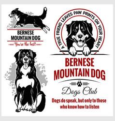 bernese mountain dog - set for t-shirt vector image