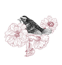 bird hand drawn in vintage style with garden roses vector image