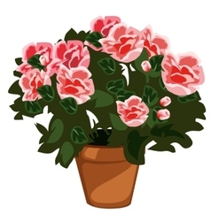 Decorative pink flowers in pot isolated vector