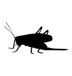 Grasshopper on white vector
