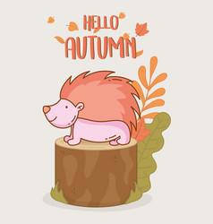 hedgehog hello autumn design icon vector image