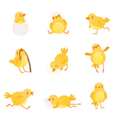 set funny yellow chicken in various situations vector image
