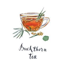 glass of buckthorn tea vector image vector image