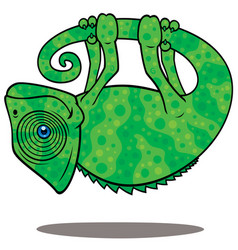 magical chameleon vector image