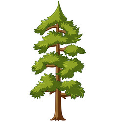 pine tree with talk trunk vector image