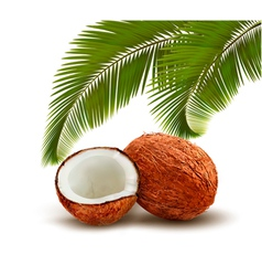 Coconut with palm leaves vector image