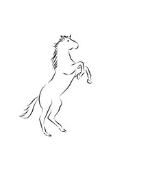 rearing horse vector image