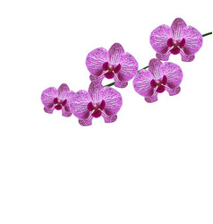 beautiful purple realistic orchid flowers on a vector image vector image