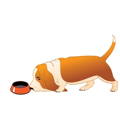 Hungry Basset Hound vector image