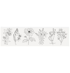 collection set summer flowers botanical line vector image
