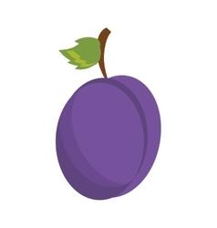 drawing plum organic fruit vector image