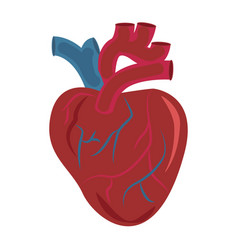 human heart organ design icon medical vector image