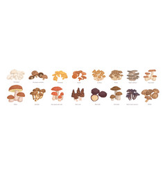 set realistic colorful edible mushrooms vector image