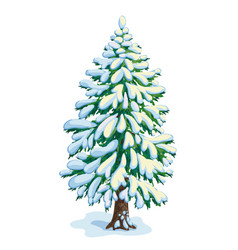 big snow-covered fir tree dwawing vector image vector image
