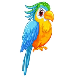 Parrot vector image vector image