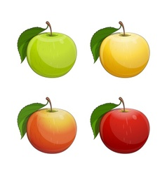 Ripe apple with green leaf vector image vector image