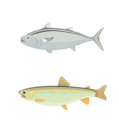 isolated river fish set of freshwater sea cartoon vector image