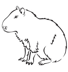 Capybara vector