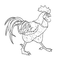 Cartoon image of rooster vector