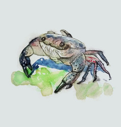 Crab character vector