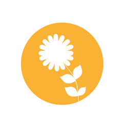 Dahlia flower natural icon vector