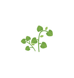 flat hand drawn parsley vector image