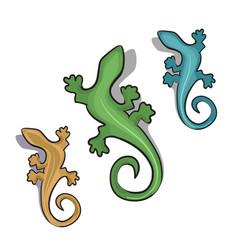 geckos vector image