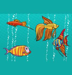 set collection of aquarium fish vector image