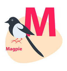 zoo abc letter with cute magpie cartoon vector image