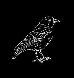 hand-drawn pencil graphics small bird vector image vector image