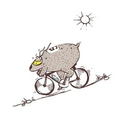 Bear riding bike fast vector image vector image