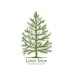 Pine tree art sketch for your design vector image vector image
