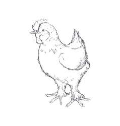 Chicken sketch animal farm icon graphic vector