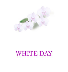 greeting card white day beautiful orchid flowers vector image vector image