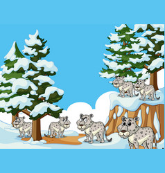 many tigers in snow mountain vector image