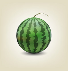 Photo realistic watermelon vector