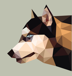 siberian husky low polygon head vector image