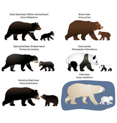 bears and bear-cubs vector image vector image