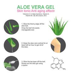 Aloe vera gel skin tonic vector
