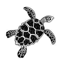 Big sea ocean wild animal turtle vector