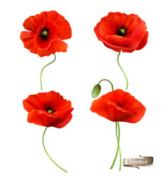 big set a red poppy isolated on white vector image