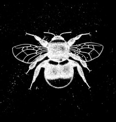 Hand drawn bumlebee mystic entomological il vector