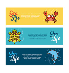 sea life flat draw vector image