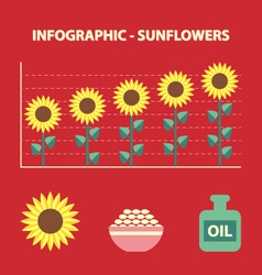 Sunflower infografic vector