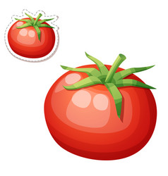 Whole tomato vegetable cartoon icon vector