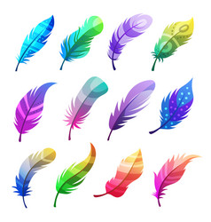 feather colored stylized decorative tribal vector image