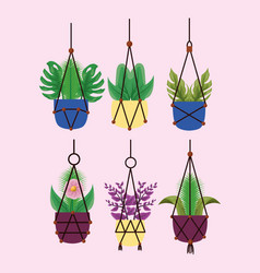 Isolated hanging houseplants inside pots vector