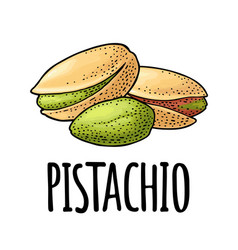 pistachio nut with and without shell vector image