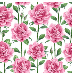 rose flowers petals and leaves in watercolor vector image